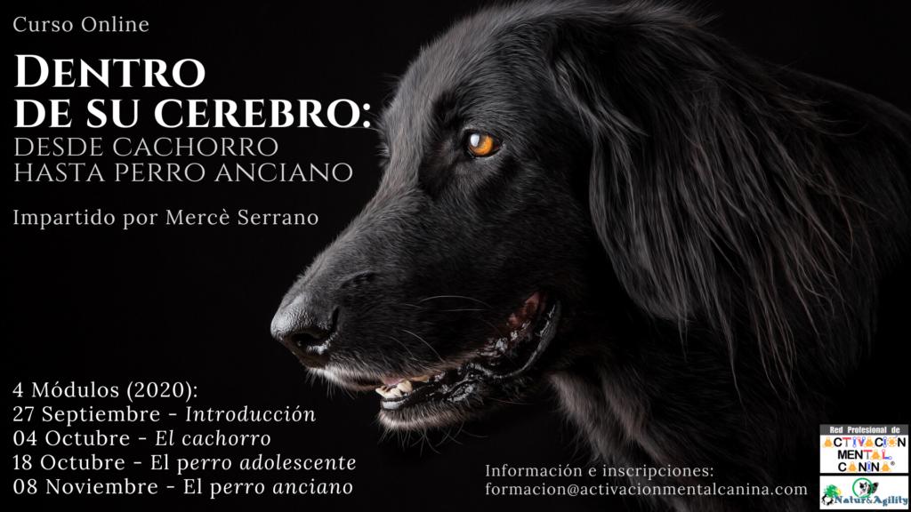 """Curso ONLINE """"Dentro de su cerebro: desde cachorro hasta perro anciano"""", con Mercè Serrano @ Seminario online (vía Zoom)"""